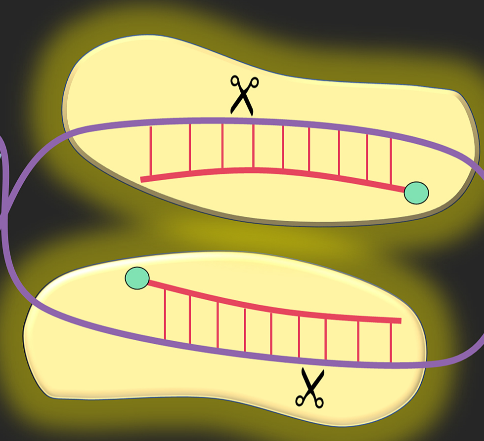 Gene editing graphic