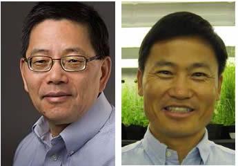 Zhixiang Chen and Jian-Kang Zhu