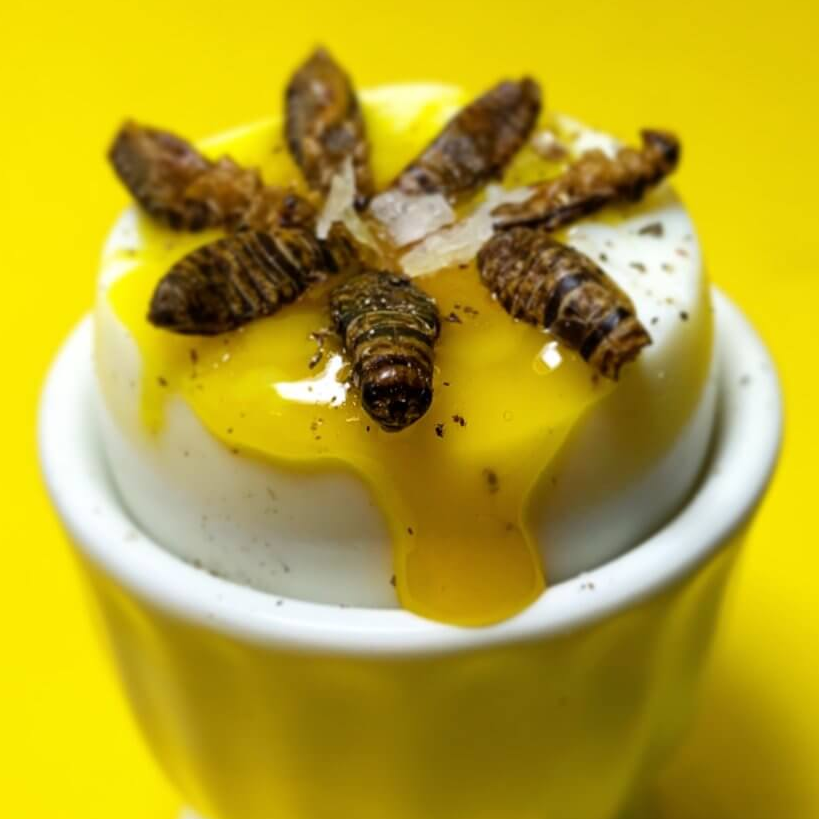 Cricket Egg dish