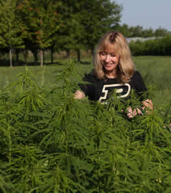 Janna Beckerman in hemp field
