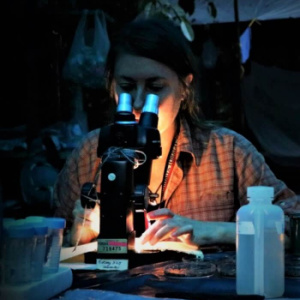Jungle Microscopy