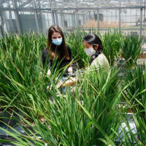 Plant Scientists